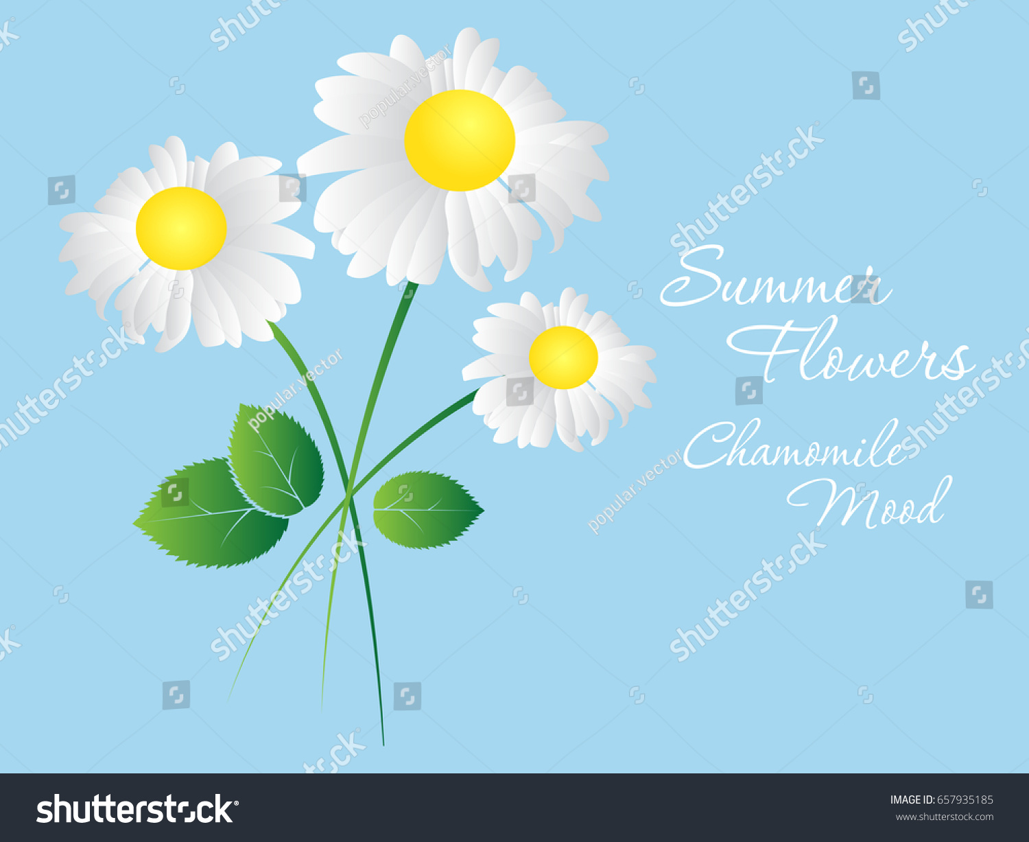 daisy flowers on blue background template stock vector 657935185