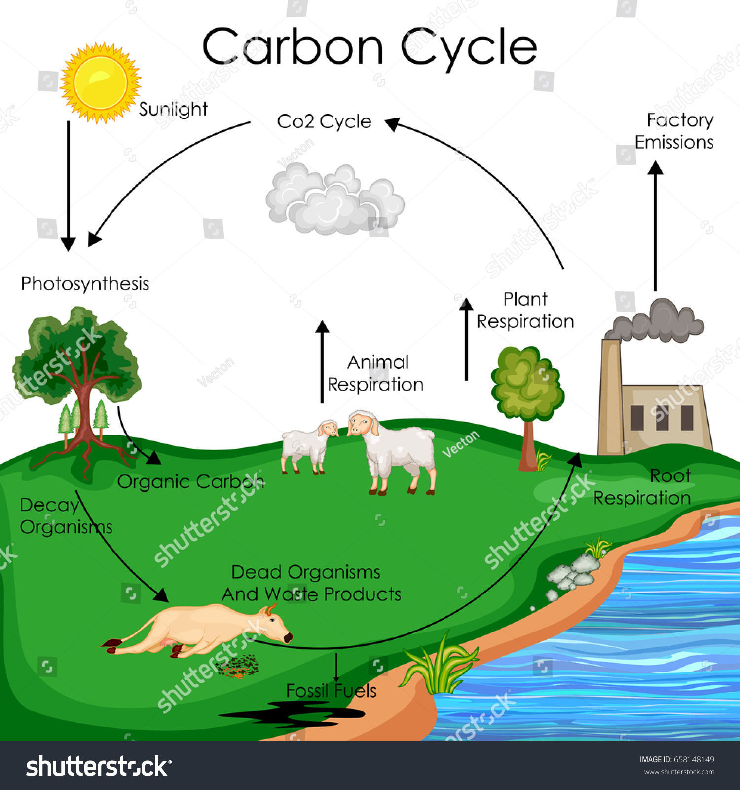Education chart biology carbon cycle diagram em vetor stock education chart of biology for carbon cycle diagram vector illustration ccuart
