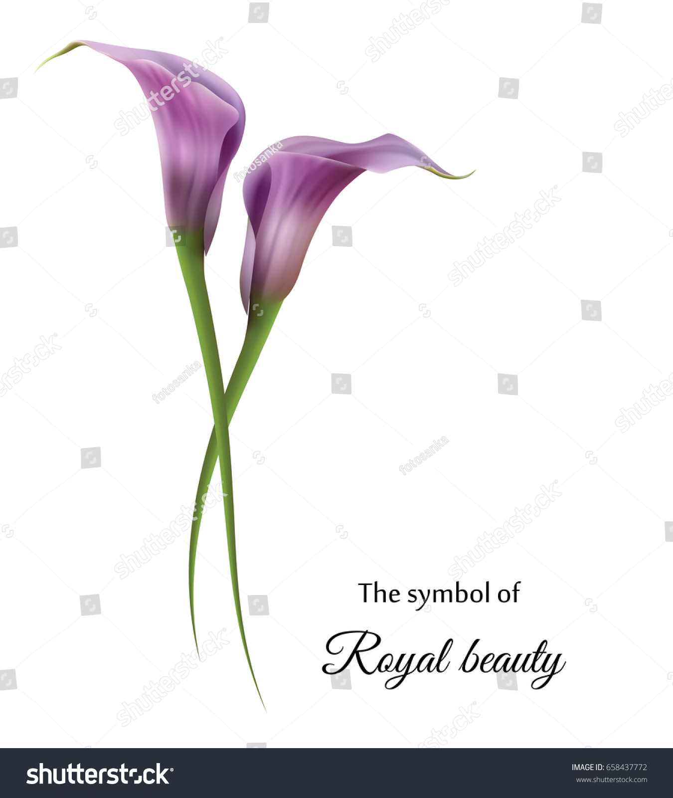 Realistic Violet Calla Lily Symbol Royal Stock Vector Royalty Free