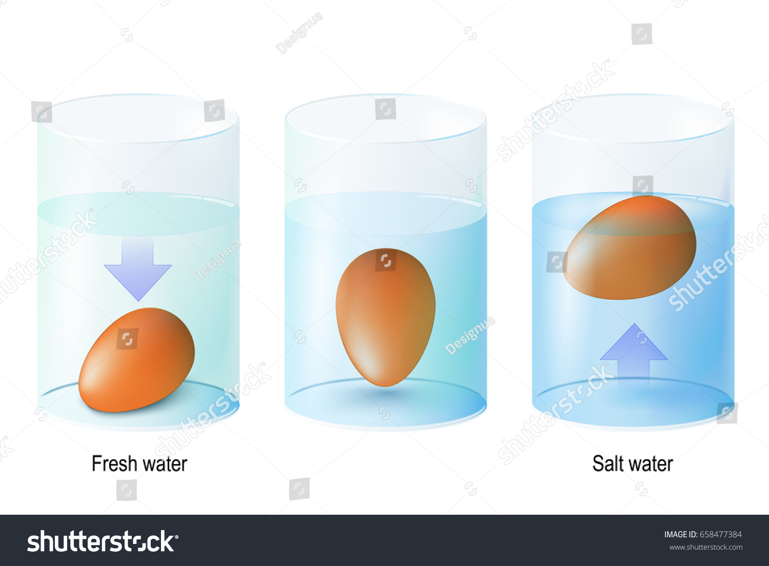 Test Egg Egg Float Science Experiments Stock Vector (Royalty