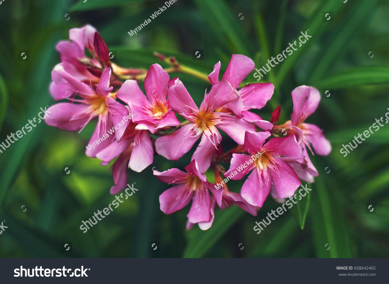 Macro Tropical Pink Flowers Stock Photo Edit Now 658642465