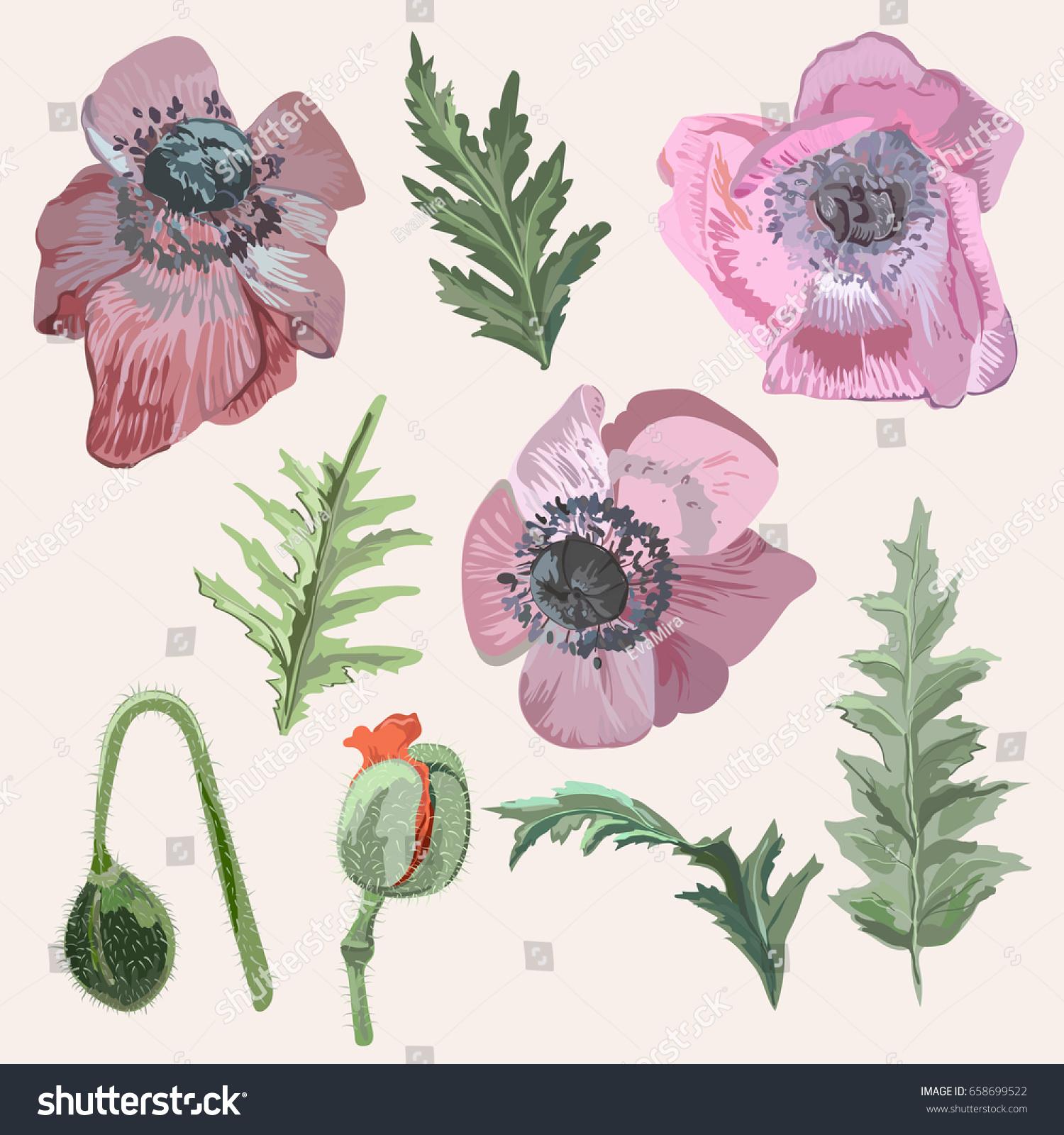 Vector Elements Poppy Flower Set Leaves Stock Vector 658699522