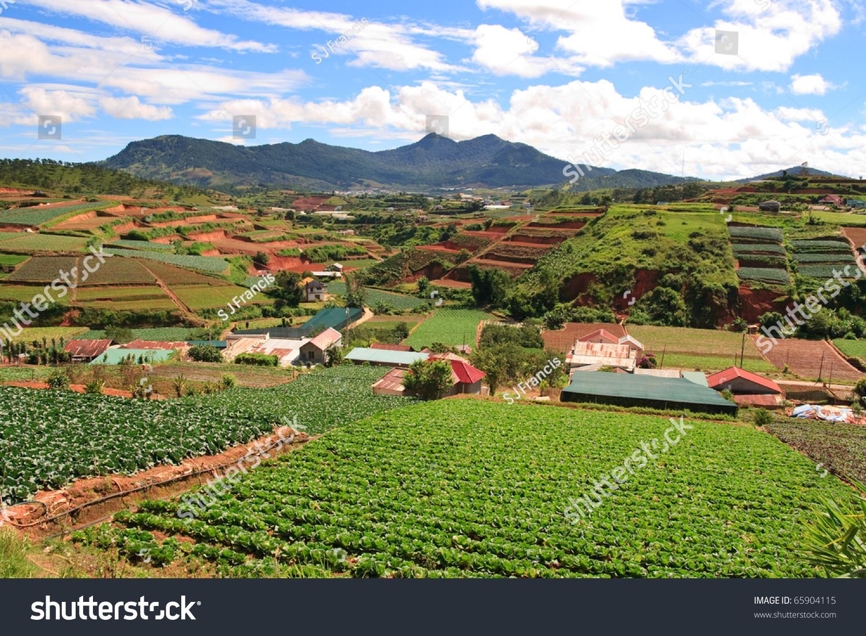 Vietnam Landscape Farm Fields Dalat Highlands Stock Photo 65904115 ...