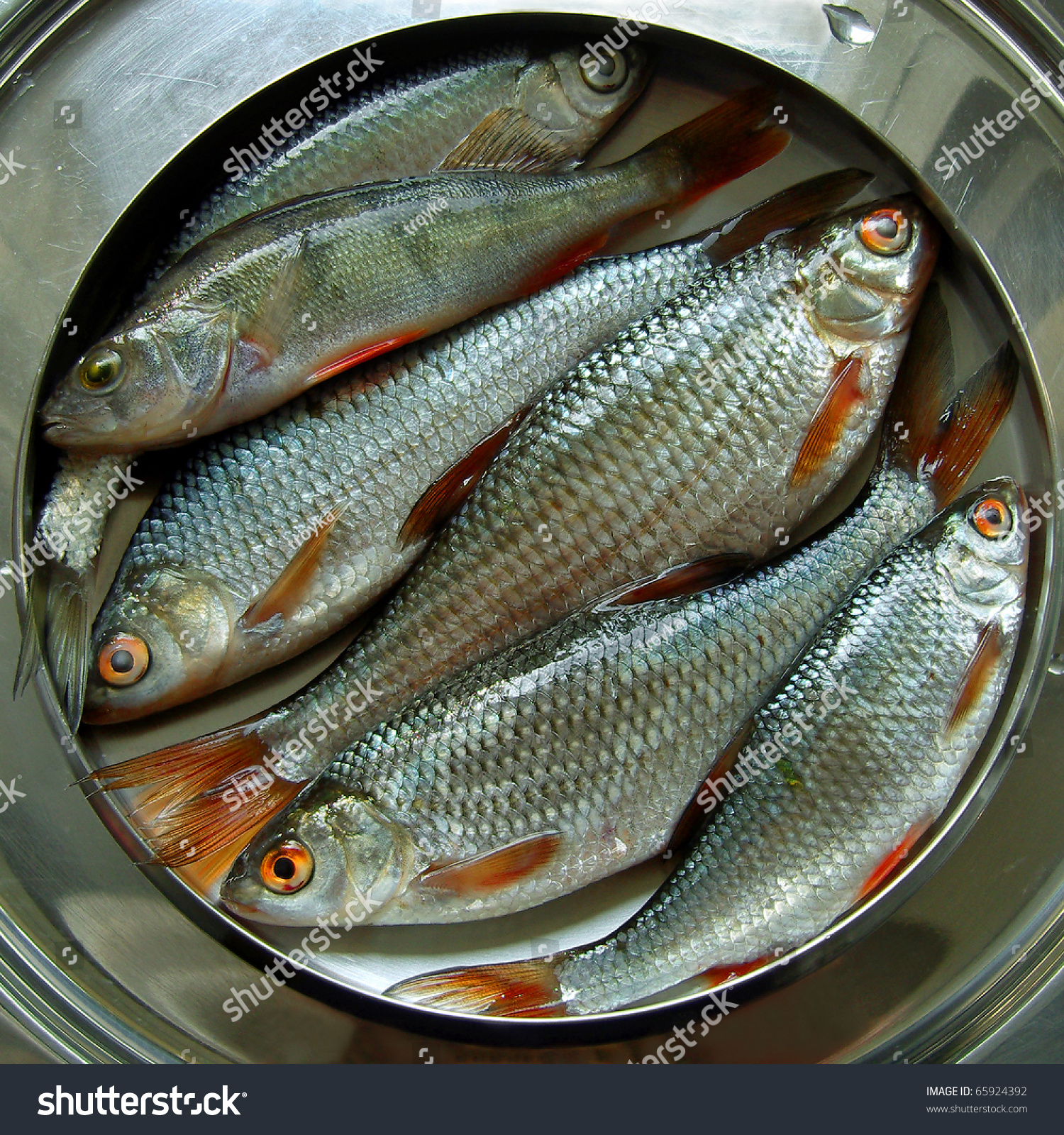 Fresh fish roaches and perch european freshwater food for Freshwater fish food