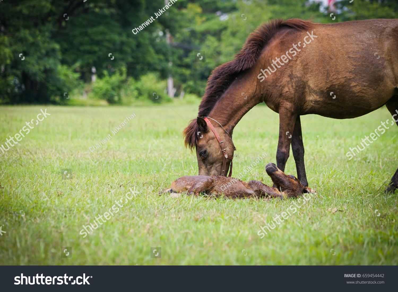 Female Horse New Born Baby Horse Stock Photo Edit Now 659454442