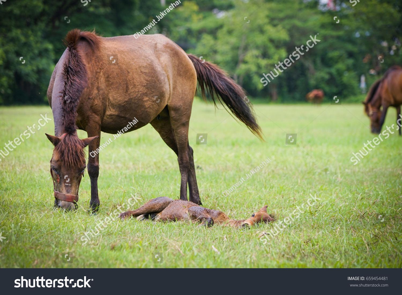 Female Horse New Born Baby Horse Stock Photo Edit Now 659454481