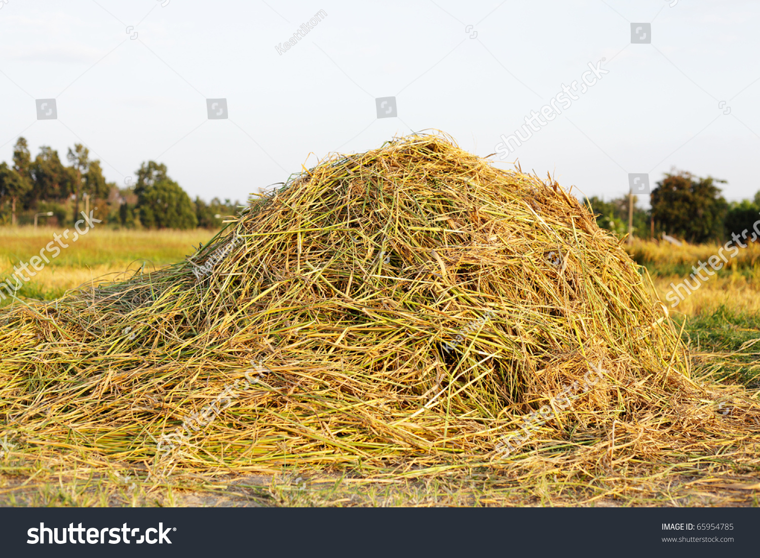 pile of rice hay stock photo 65954785 shutterstock. Black Bedroom Furniture Sets. Home Design Ideas