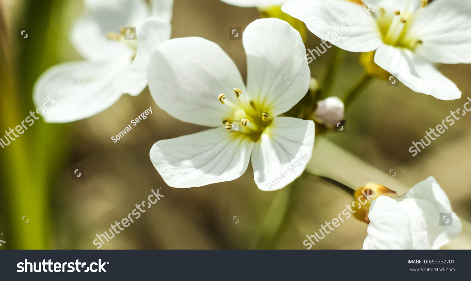 Bright white flowers on a background of green leaves ez canvas mightylinksfo