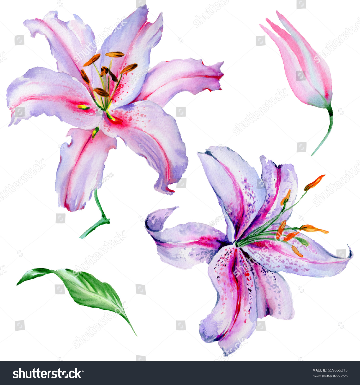 Similar images stock photos vectors of wildflower lily flower similar images to wildflower lily flower in a watercolor style isolated aquarelle wild flower for background texture wrapper pattern frame or border izmirmasajfo