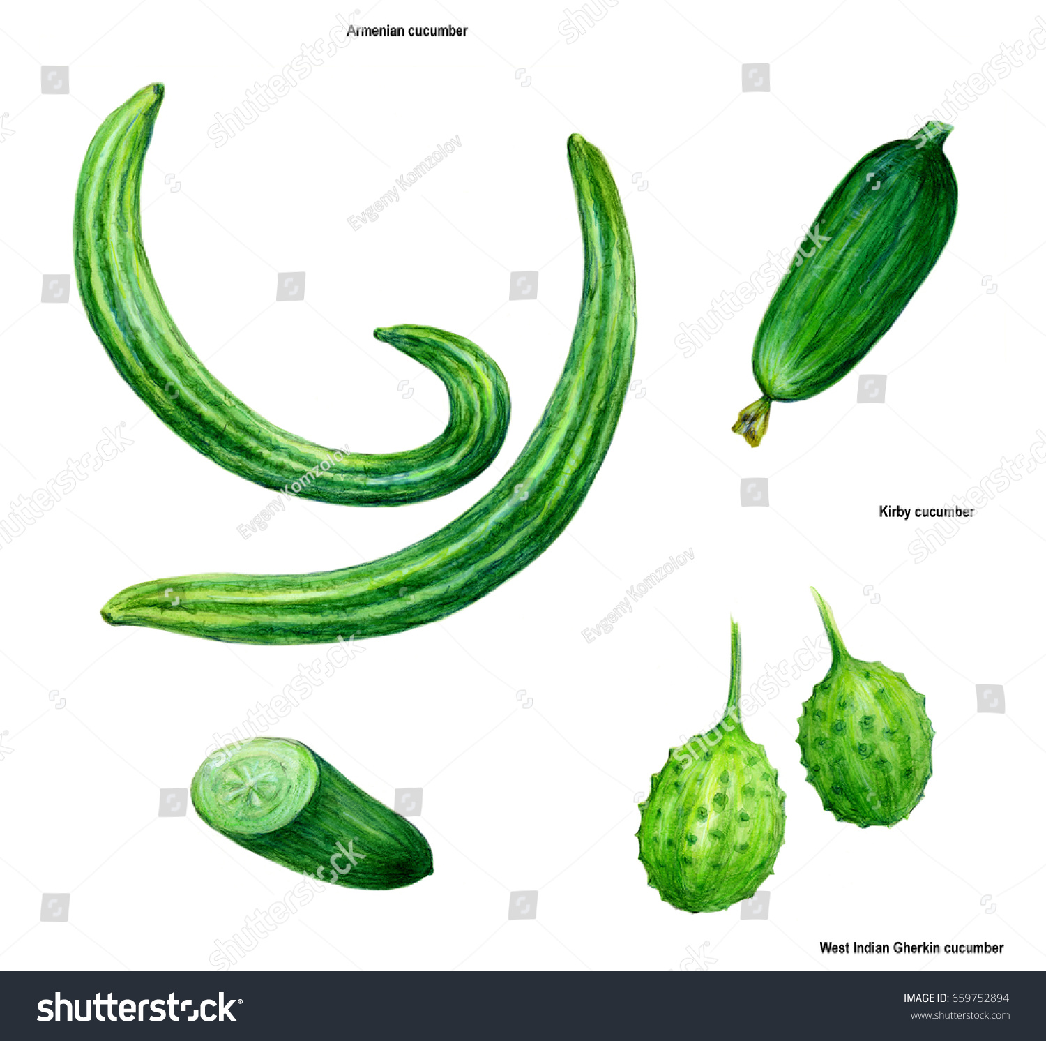 Cucumber Drawing Picture Color Stock Illustration 659752894 ... for Drawing Cucumber  45gtk