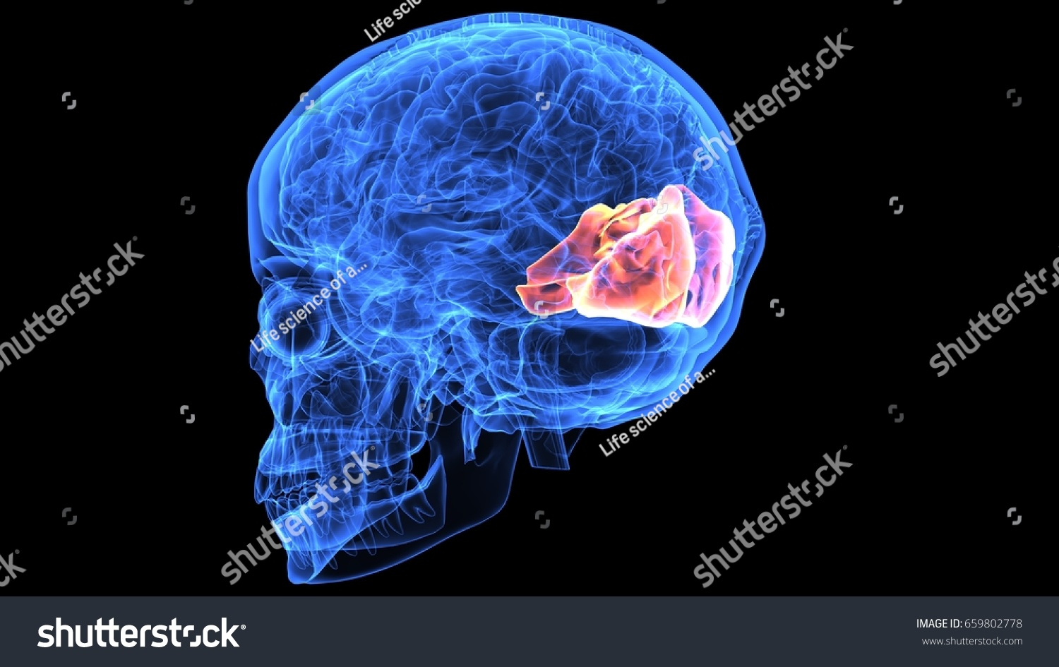 3d illustration of human body skull and brain anatomy | EZ Canvas