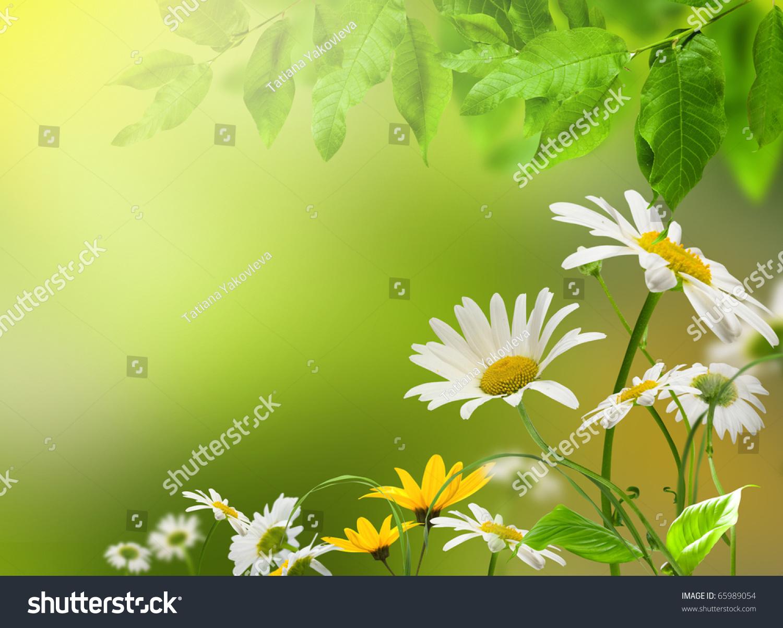 White Yellow Flowers Daisywheel On Green Stock Photo Edit Now