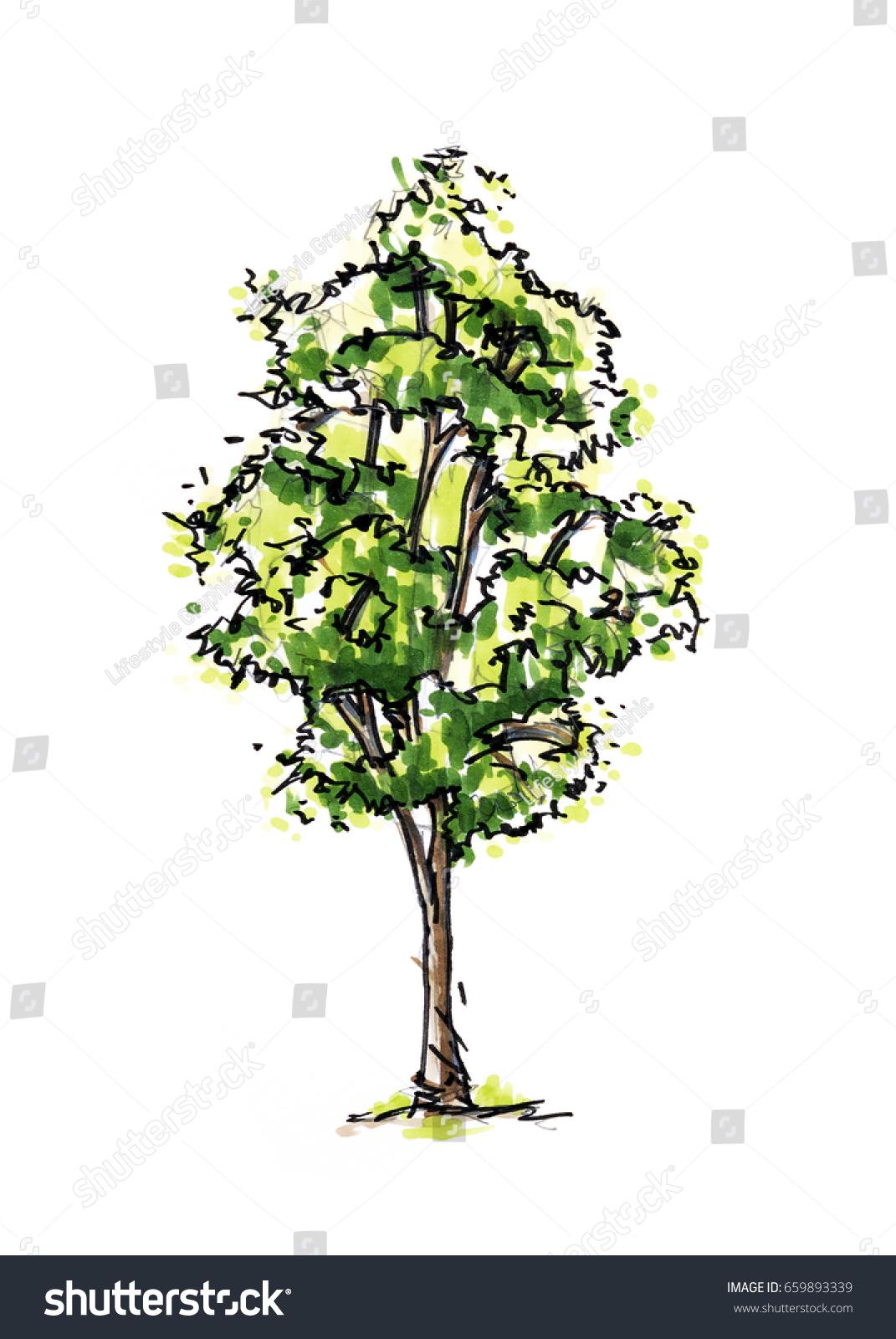 Tree Color Sketch Landscape Design Drawing Stock Illustration ...