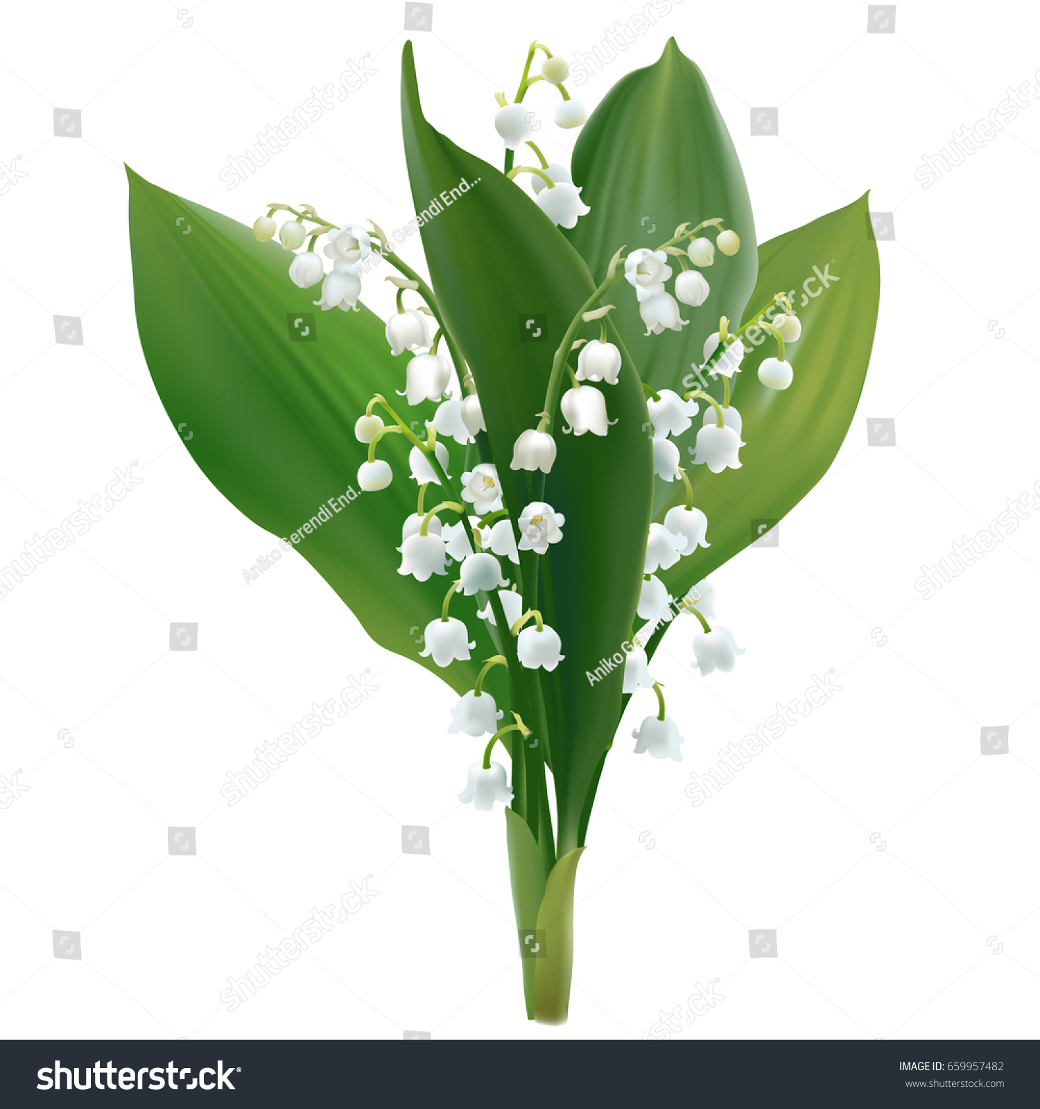 Convallaria majalis lilly valley hand drawn stock photo photo convallaria majalis lilly of the valley hand drawn vector illustration of a bouquet of izmirmasajfo