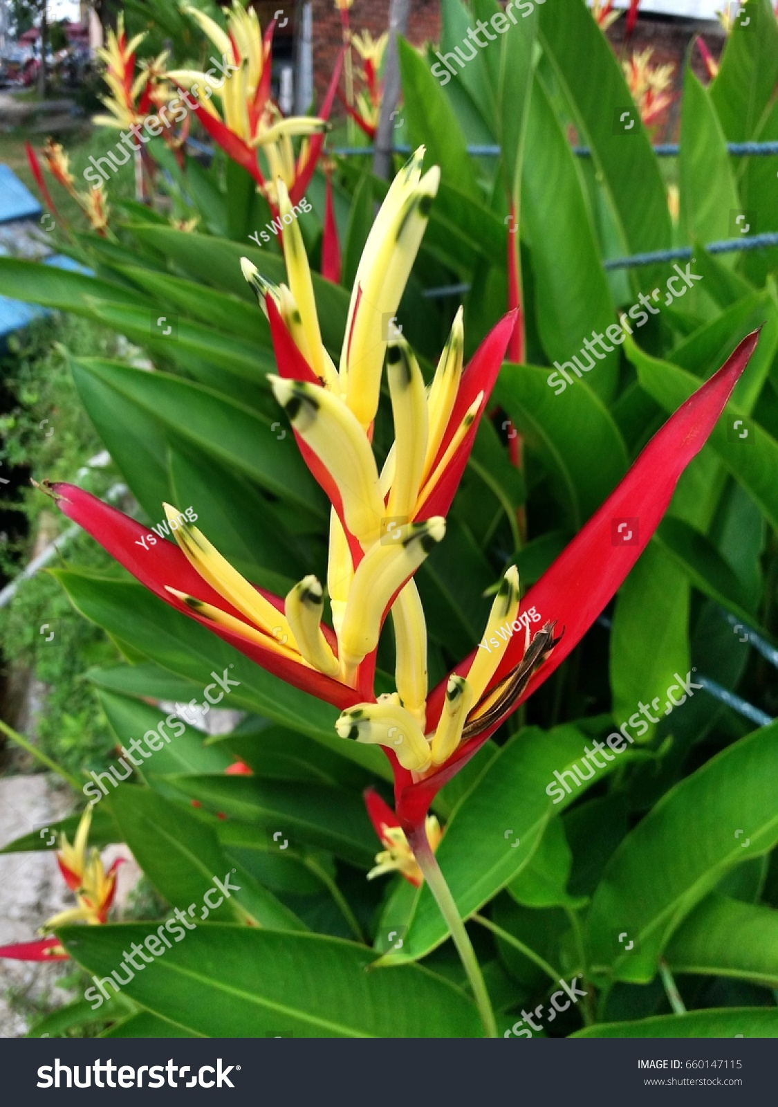 Paradise Of Bird Flower In Yellow And Red Color Ez Canvas