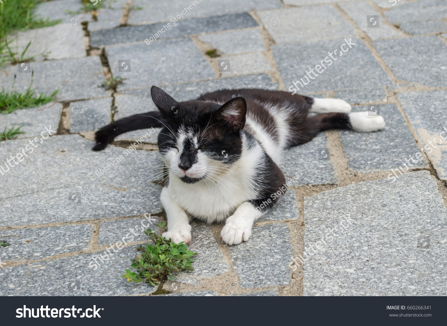 Silly Cat Posing Ground Stock Shutterstock