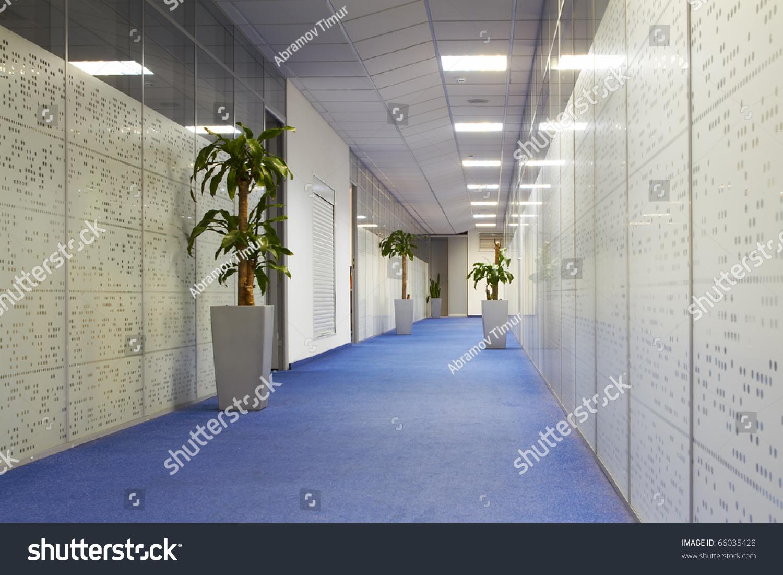 Office Corridor Palm Trees Pots Carpeting Stock Photo