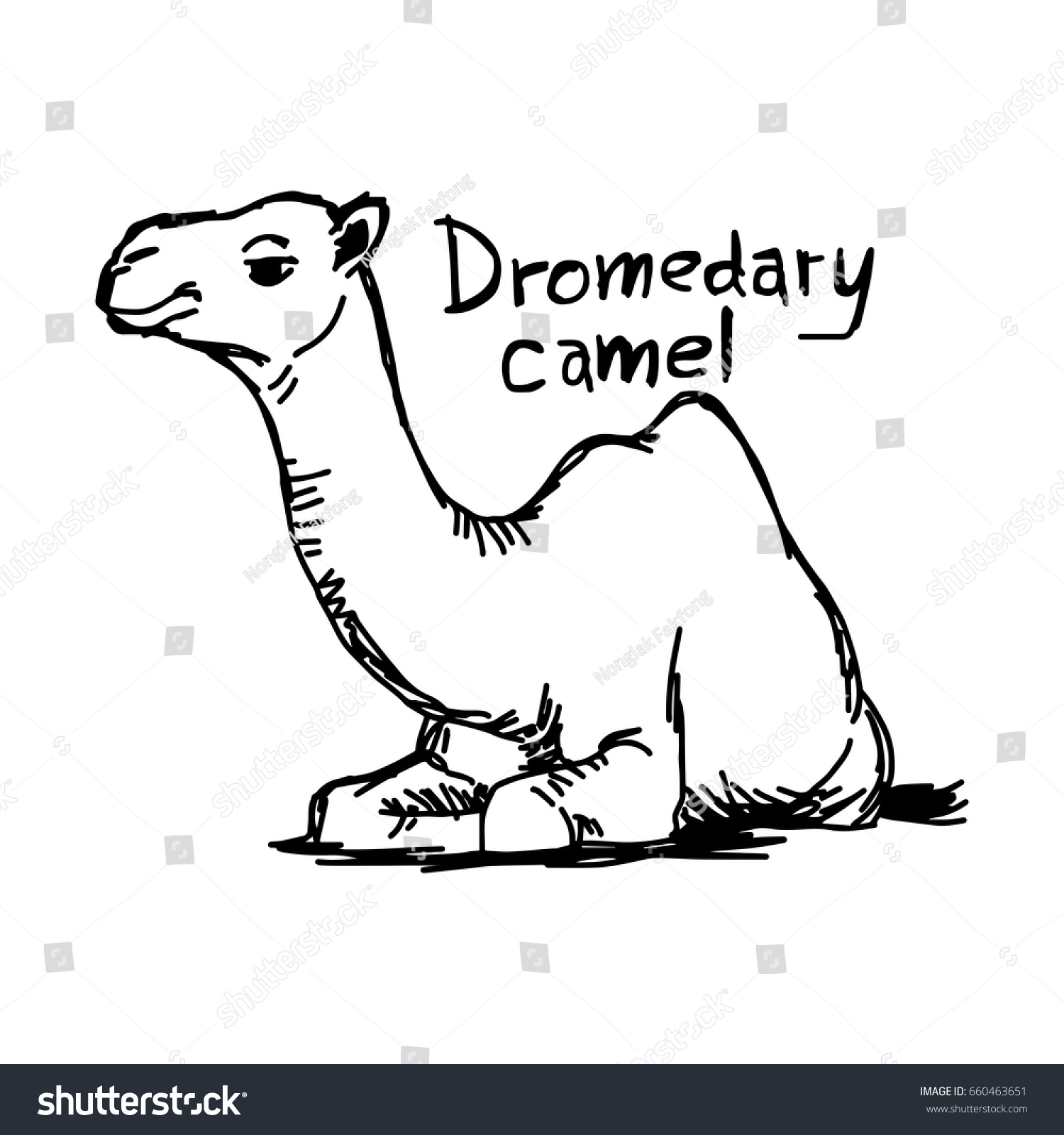 Dromedary Camel Sitting On Sand Vector Stock Vector HD (Royalty Free ...