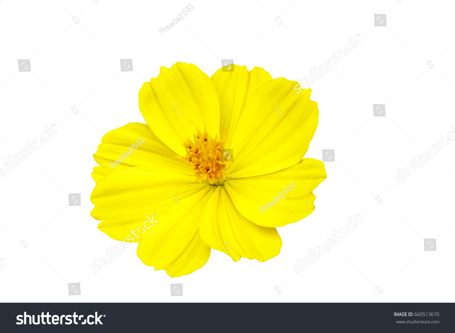 Yellow Flowers From The White Background Ez Canvas
