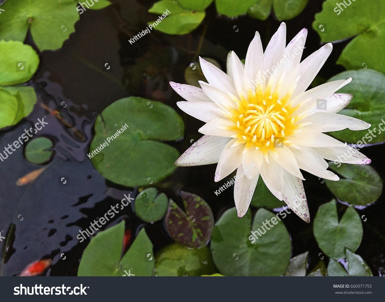 Lotus flower ez canvas izmirmasajfo