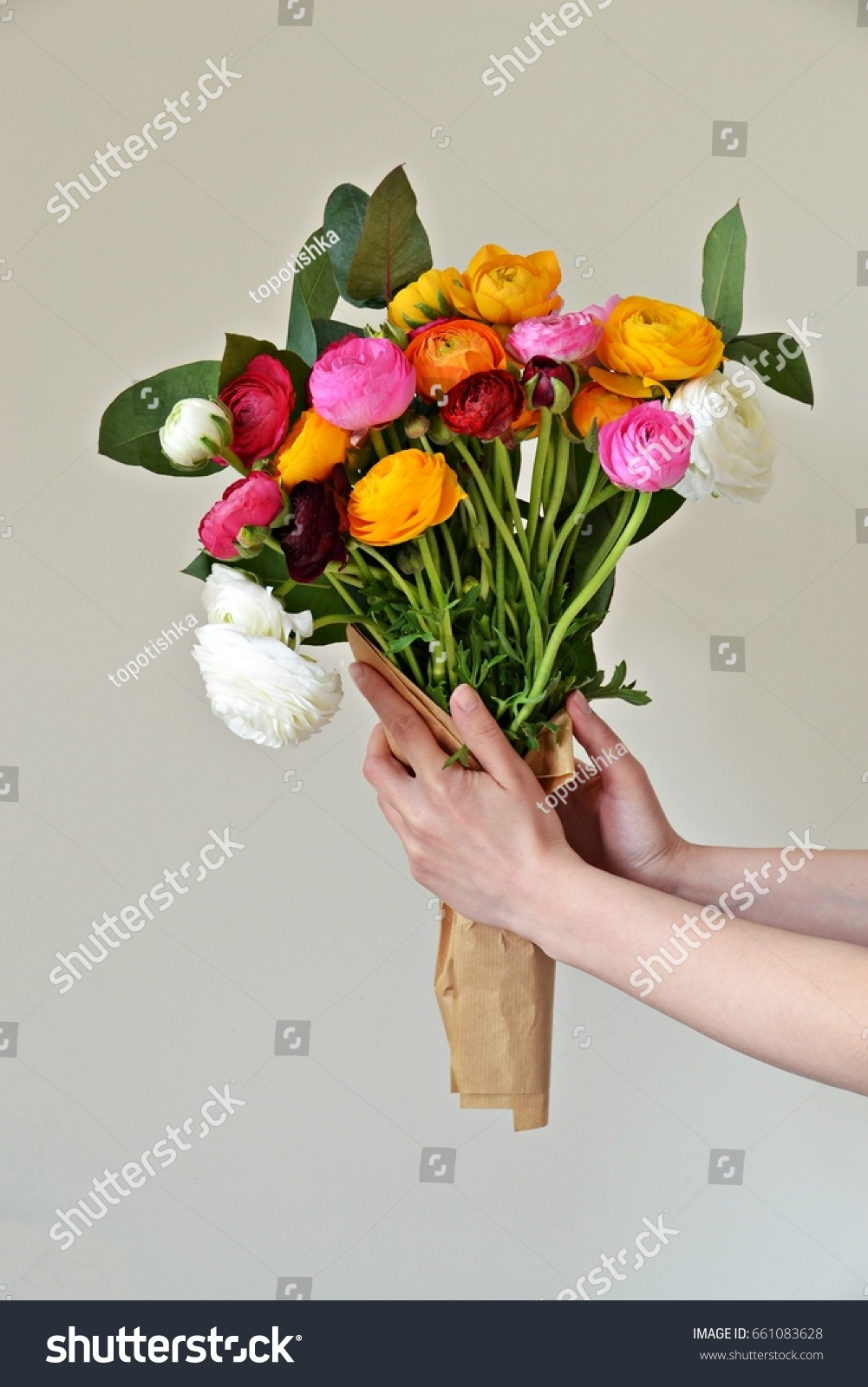Ranunculus Flower Bouquet Hand On White Stock Photo & Image (Royalty ...