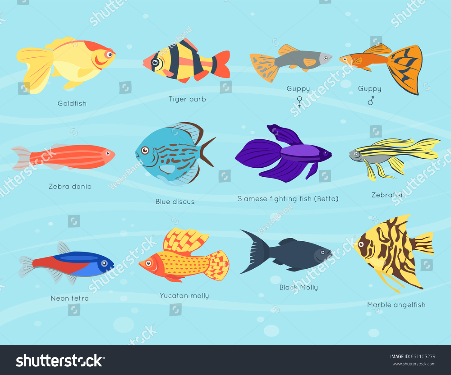 exotic tropical fish different colors underwater stock vector