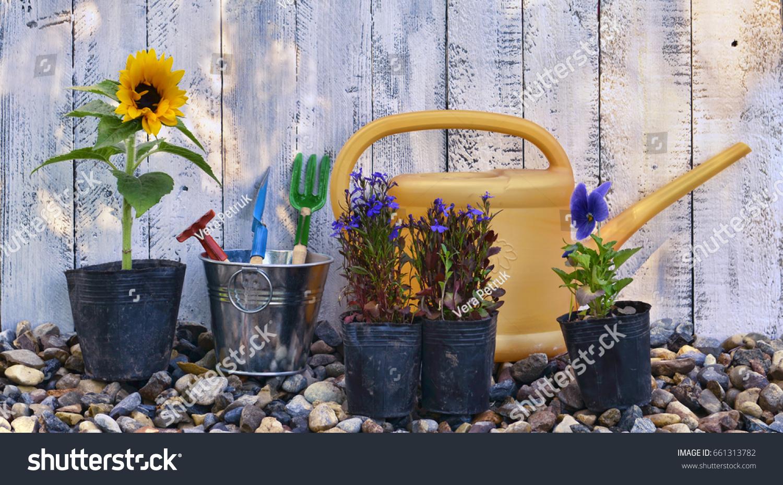 Still Life Summer Flowers Planting Pots Stock Photo Royalty Free