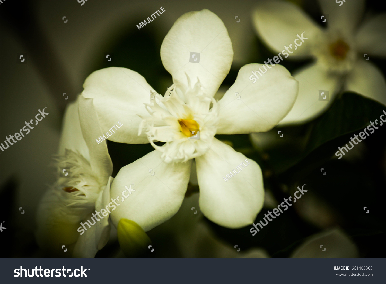 White Orchid Flower Ez Canvas