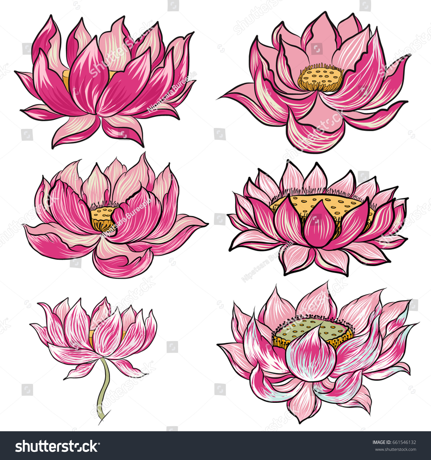Hand Drawn Lotus Flower Vector Set Stock Vector Royalty Free