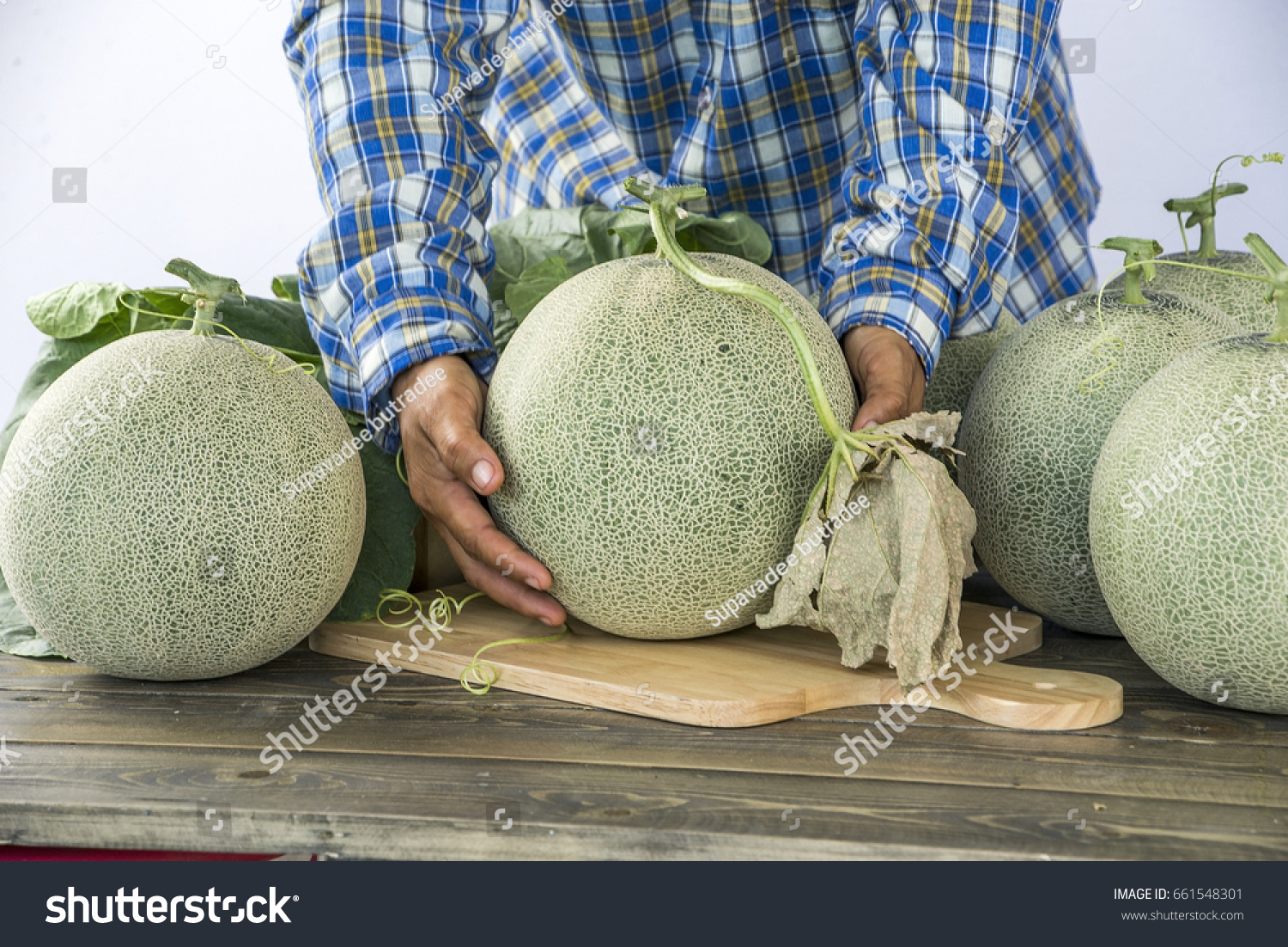 Farmer Hand Holding Melon Check Size Stock Photo Edit Now 661548301 Learn all about the different types of cantaloupes so you can distinguish each type, know the distinct ideal growing time for each, and learn to differentiate cantaloupes from muskmelons. https www shutterstock com image photo farmer hand holding melon check size 661548301