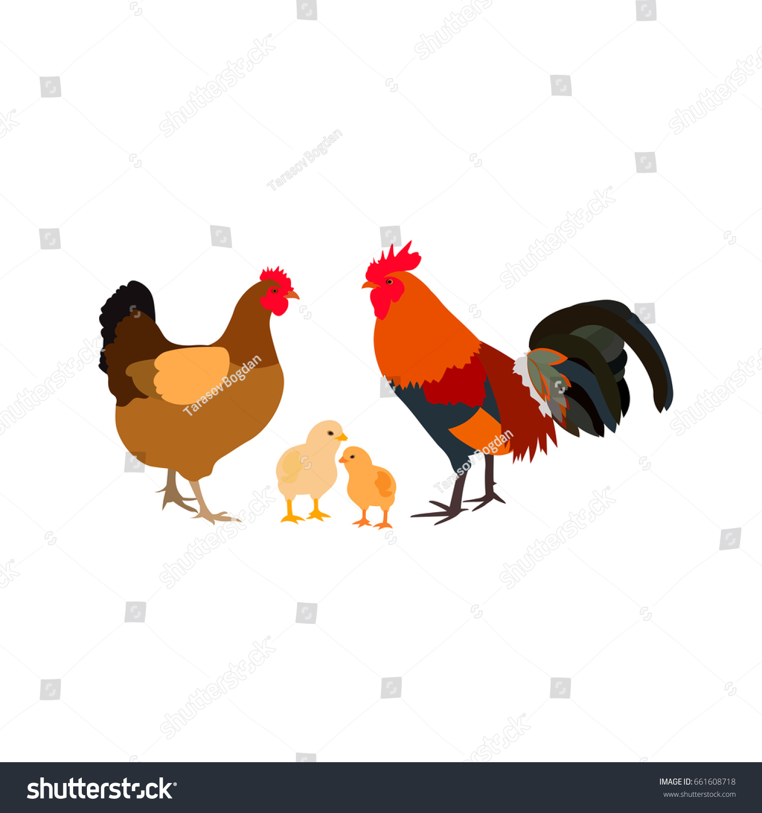chicken rooster white farm family color stock vector 661608718