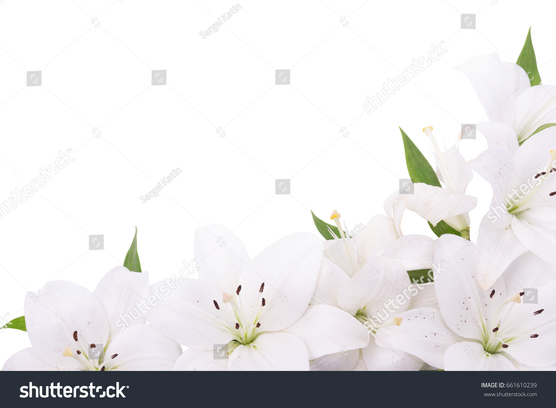 White Lilies Flowers Bottom Frame Corner Stock Photo Edit Now