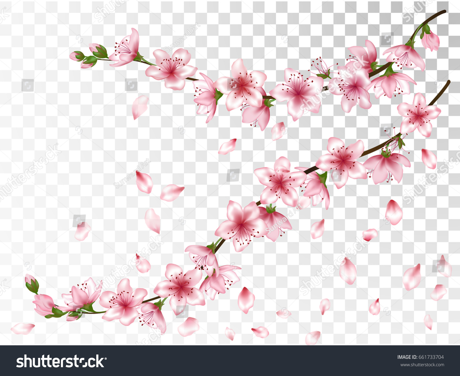 Flying Petals And Blooming Cherry Tree Twigs Set Blossom Collection On Transparent Background Vector