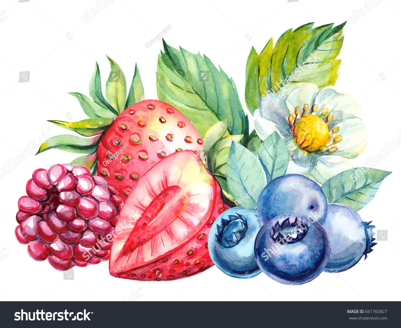 Raspberry: useful properties of berries and leaves 41