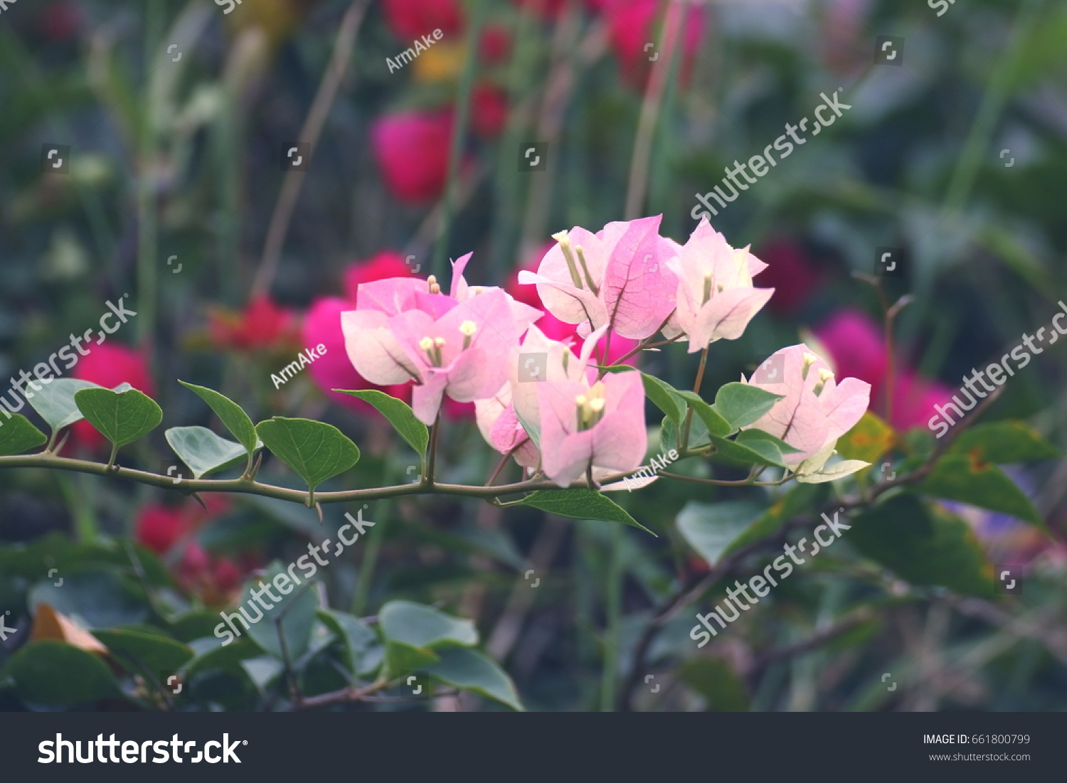 Beautiful natural flowers stock photo edit now 661800799 beautiful natural flowers izmirmasajfo