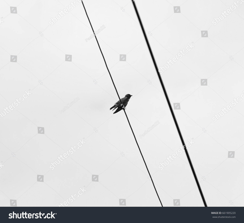 Little Bird On Electric Wire Black Stock Photo 661905220 - Shutterstock