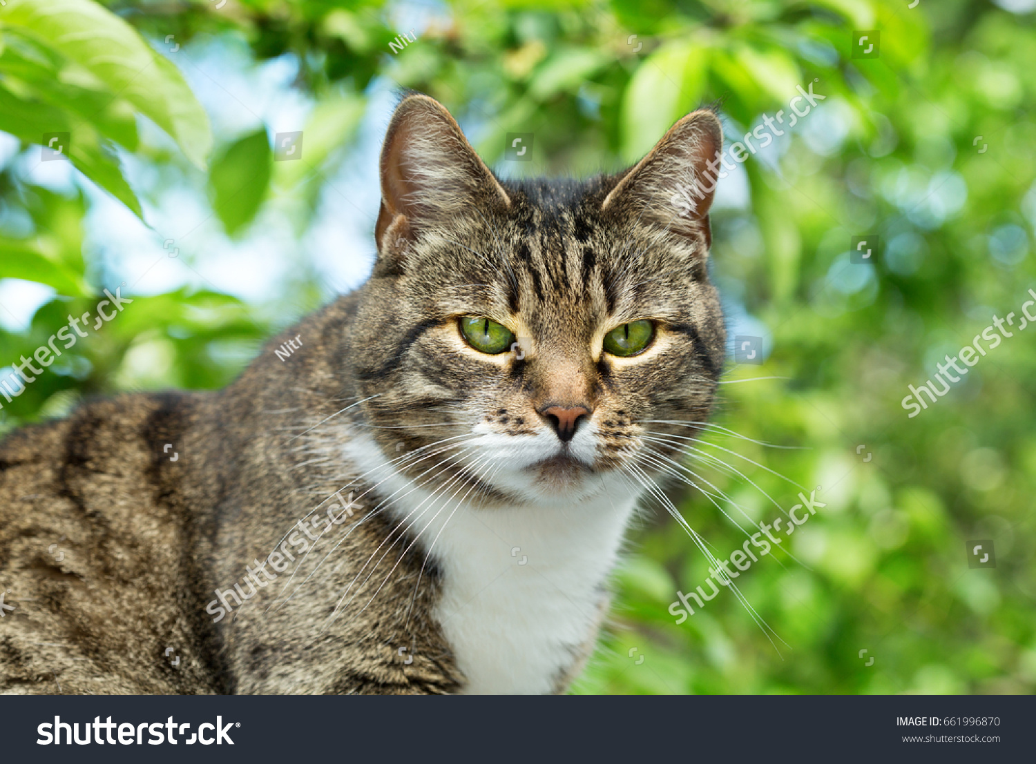 Grey Cat Green Eyes Green Stock Shutterstock