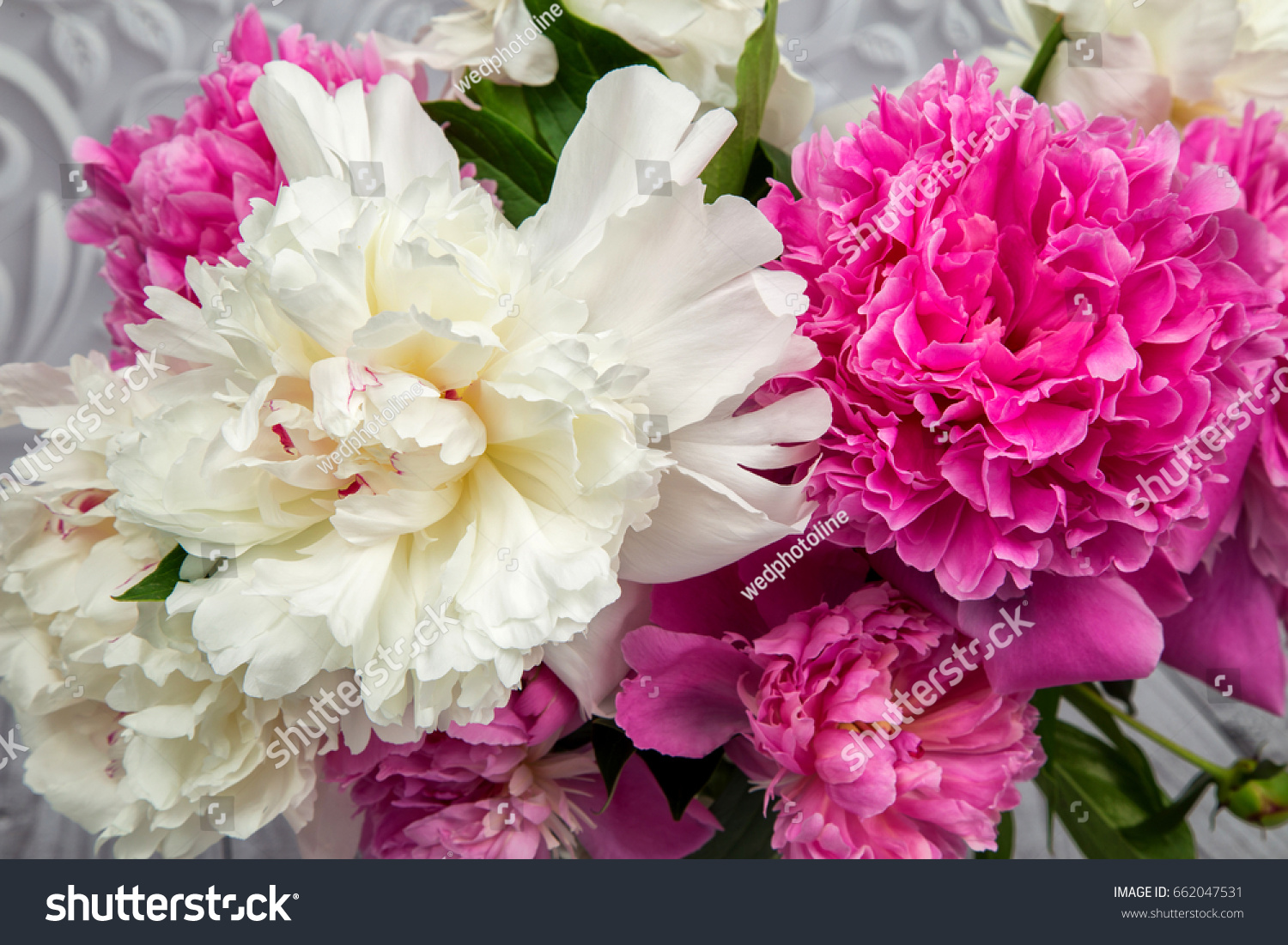 Ender Pink And White Peony Flowers Close Up Ez Canvas