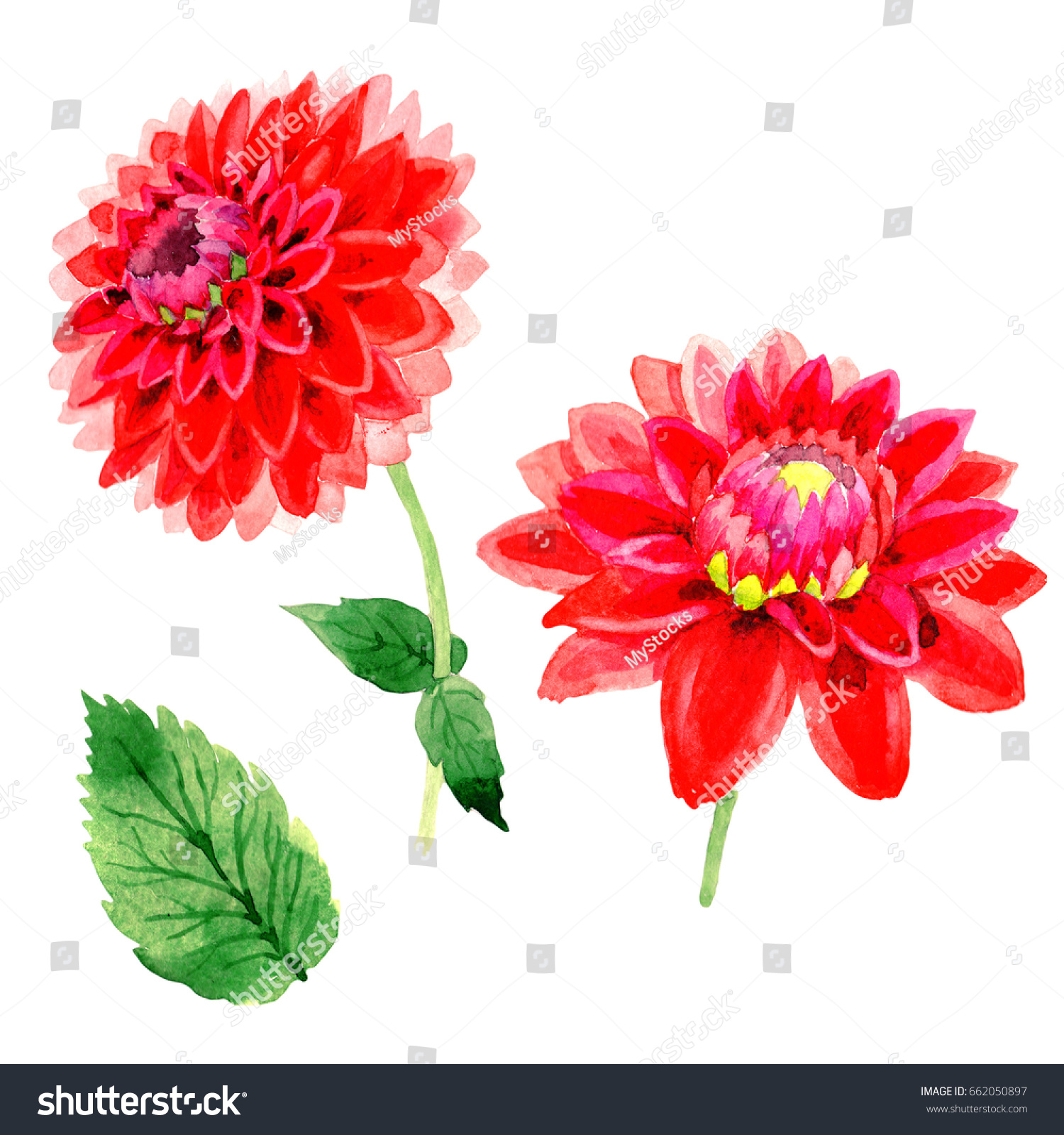 Wildflower dahlia flower watercolor style isolated stock wildflower dahlia flower in a watercolor style isolated full name of the plant red izmirmasajfo