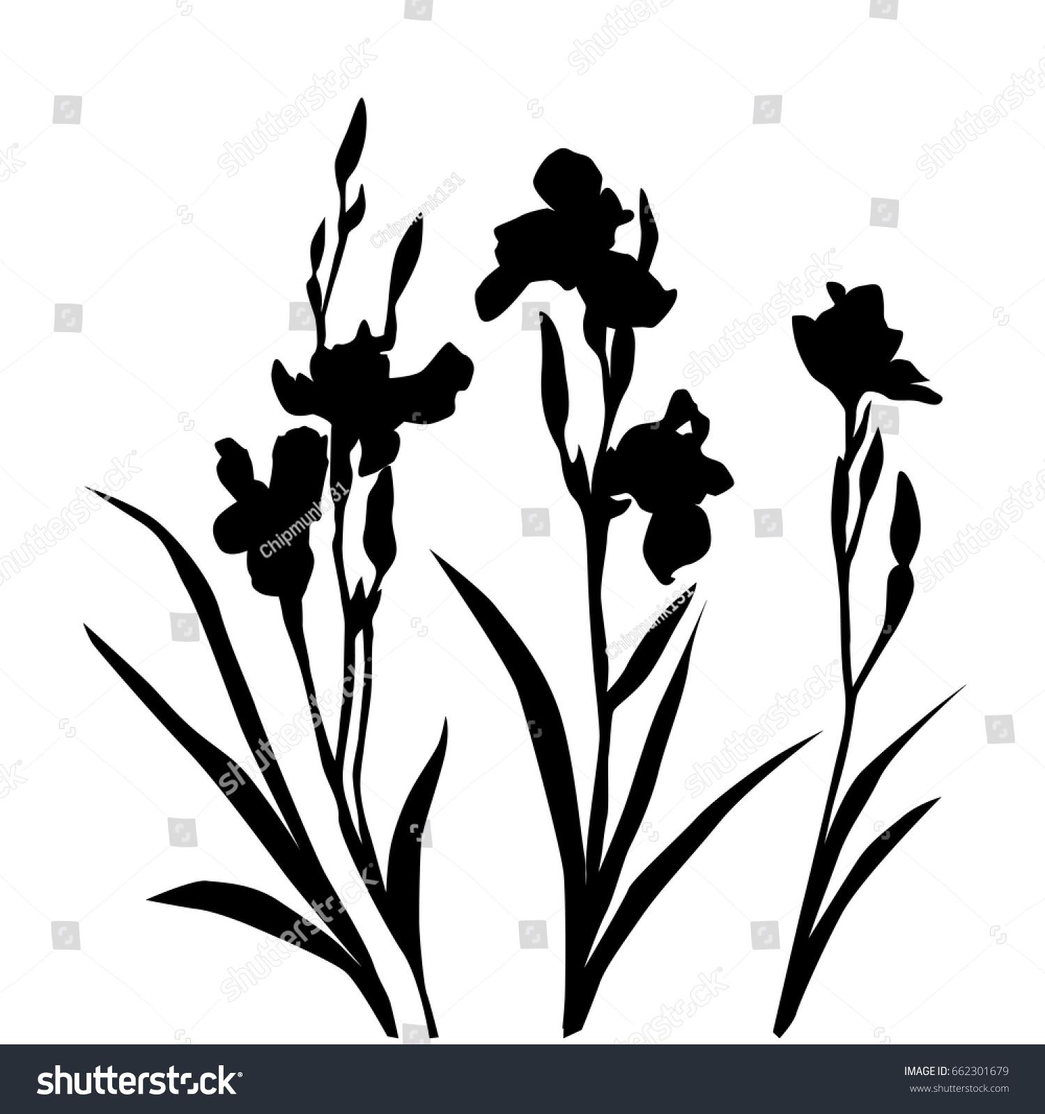 Vector Silhouette Flower Iris Black Color Stockvector Rechtenvrij