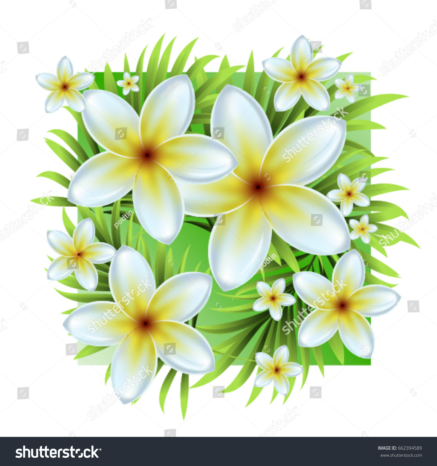 Palm Leaves Tropical White Flowers Vector Stock Vector Royalty Free