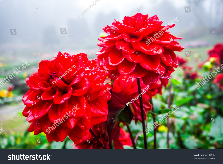 Good Morning Sunday Stock Photo Edit Now 662481985 Shutterstock