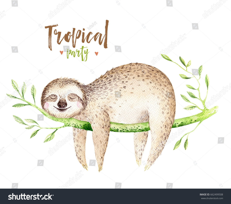 baby animals sloth nursery isolated painting stock