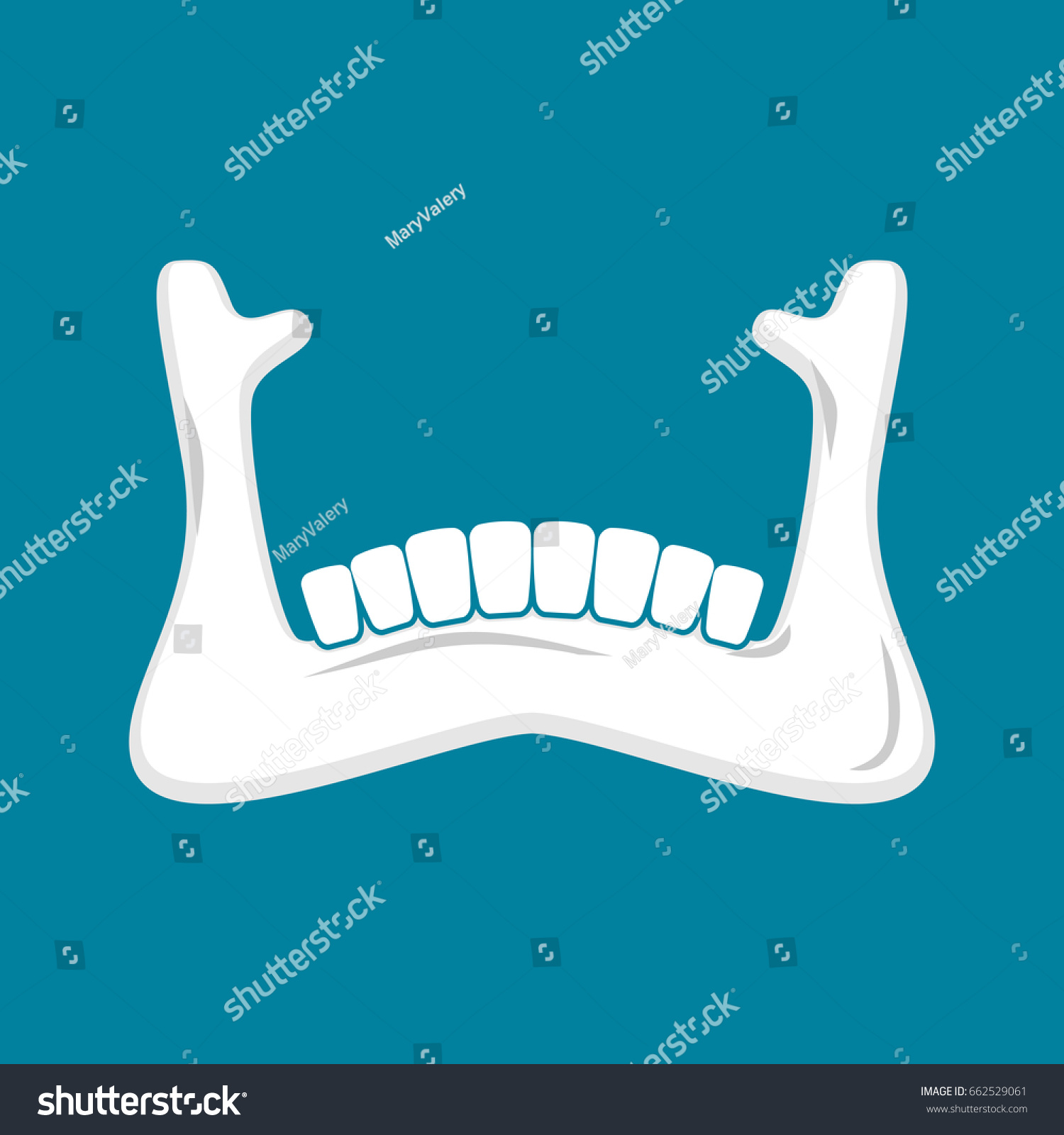 Mandible Human Isolated Lower Jaw Anatomy Stock Illustration