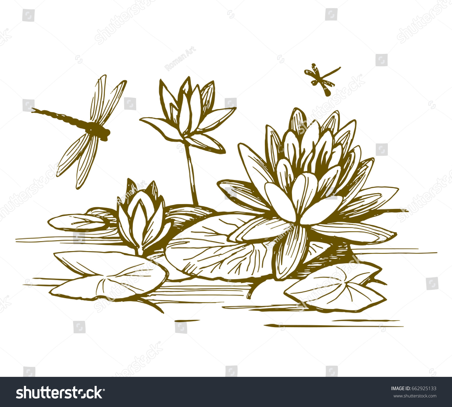 flowers water lilies leaves on water stock vector 662925133
