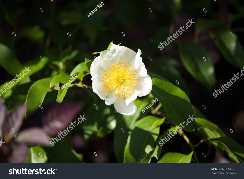 Beautiful Spring Flowers In The Garden Ez Canvas
