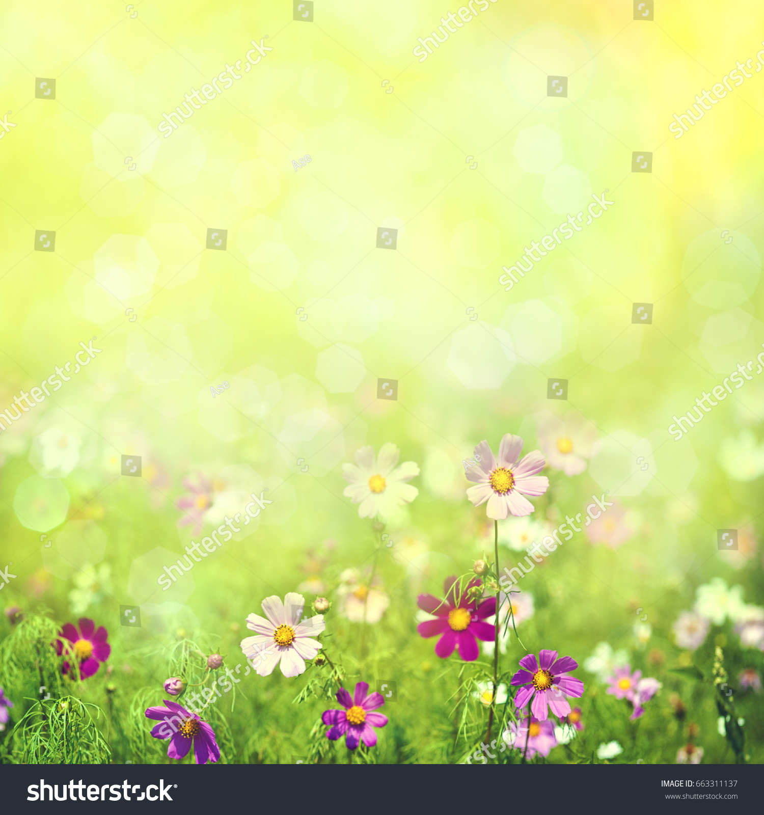 Beauty Spring And Summer Landscape With Fresh Daisy Flowers Ez Canvas