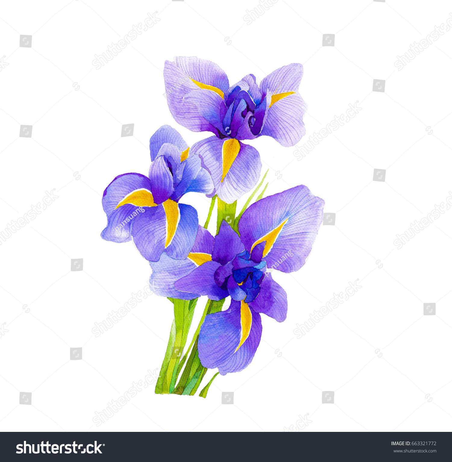 Iris Flower National Flower France Stock Illustration 663321772