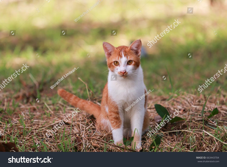 Orange tabby cute cat | EZ Canvas