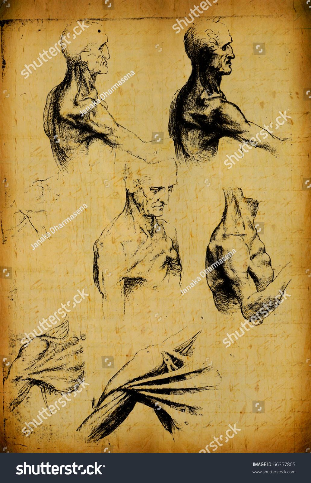 Anatomy Art By Leonardo Da Vinci Stock Illustration 66357805 ...